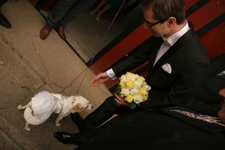 Svadobné šatičky pre psa,