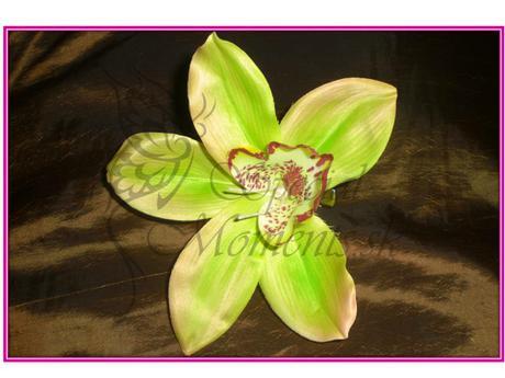 Orchidea do vlasov,