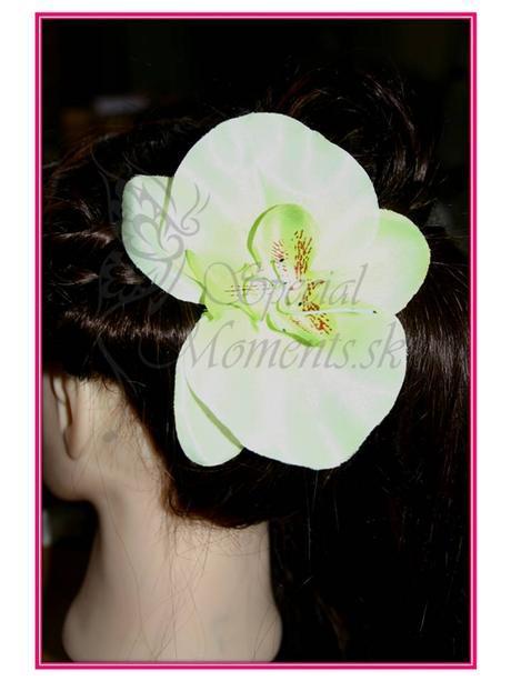 Orchidea do vlasov veľká - 4 farby,