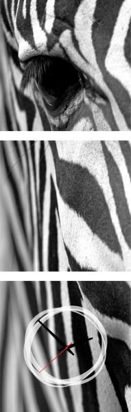 3 dielne obrazové hodiny Zebra, 35x105cm,