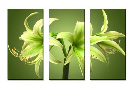 3-dielny obraz na plátne 3x30x70cm Kvet zelený,