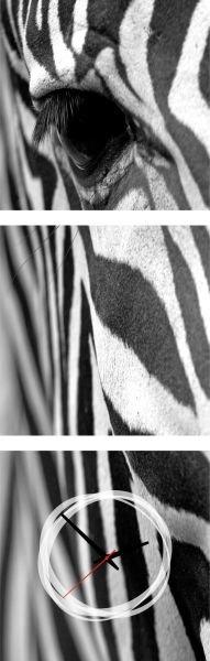 3-dielny obraz s hodinami, Zebra, 35x105cm,