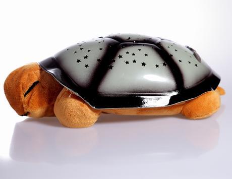 Nočná svietiaca korytnačka hnedá,