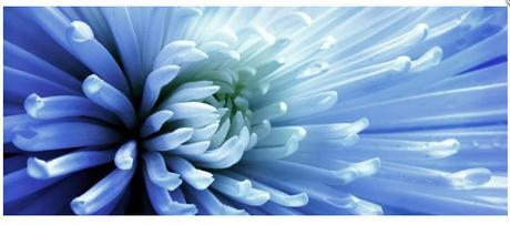 Obraz na plátne 38x100cm KVET modrý,