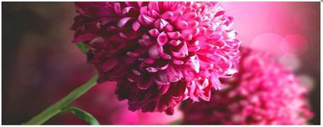 Obraz na plátne 38x100cm KVETY ružový,