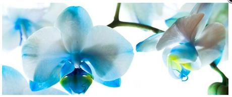 Obraz na plátne 38x100cm LUPENE KVETOV modro-biely,