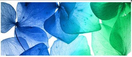 Obraz na plátne 38x100cm LUPENE modro-zelený,