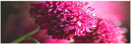 Obraz na plátne 45x140cm KVETY ružový,