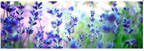 Obraz na plátne 45x140cm POLE KVETOV modro-zelený,