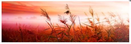 Obraz na plátne 45x140cm POLE KVETOV oranžový,