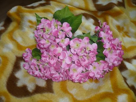 Kvety Hortenzia,