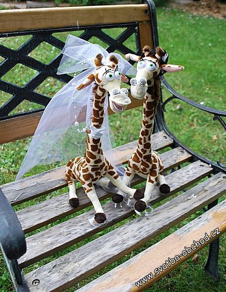 Žirafy na auto,