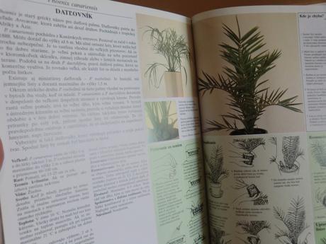 Kniha Pestujeme izbové rastliny,