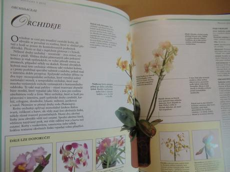 Rostliny v bytě - kniha v českom jazyku,
