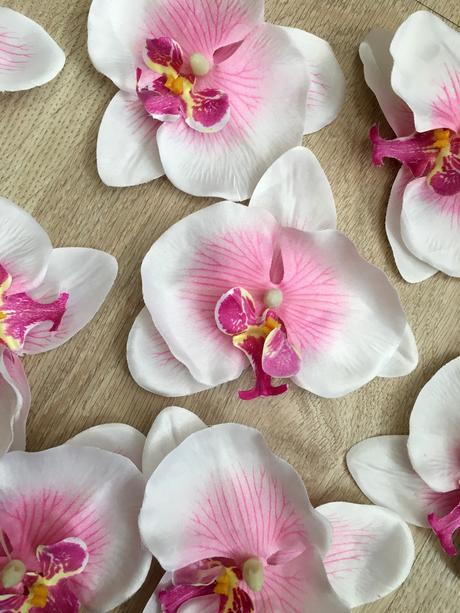 Orchidea 25ks,
