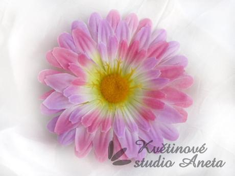 Květ gerbera růžová-fialková,