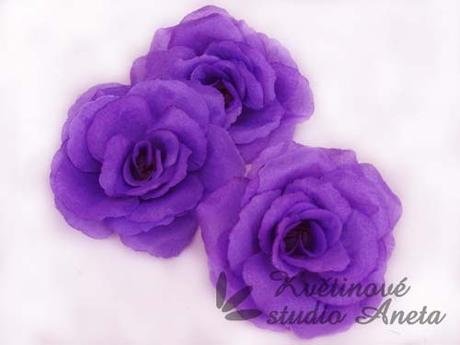 Květ růže fialový,