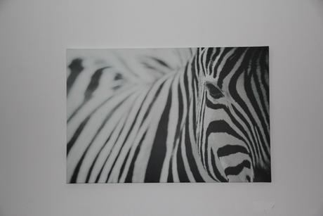 Obraz zebra ,