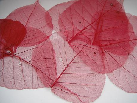 Skeletový list- různé barvy (5ks),