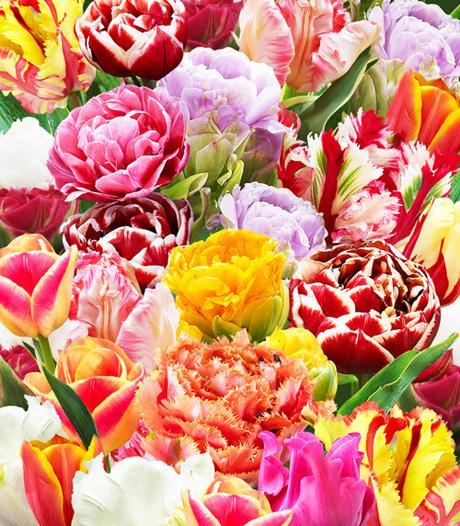Tulipany 30 Extramix ,