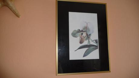 Obraz orchydea,