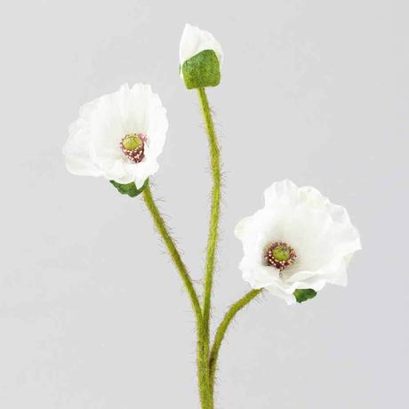Hodvábny kvet divý mak,