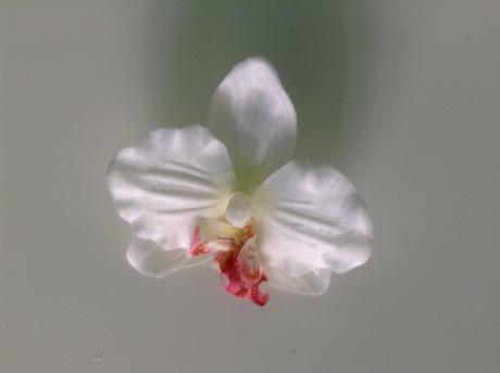 Květy orchidejí,