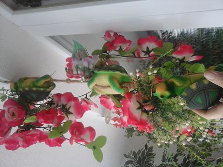 želva kvetinače,