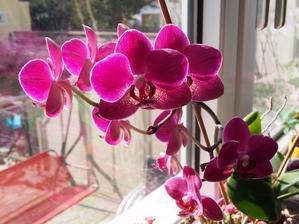 orchidejka mi krasne kvete, ta barva je uplne uzasna