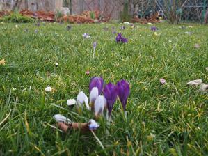 ale jo, sou tam, ale fakt mi travnik kvetl uz mnohem lip, musim letos dyl pockat s kosenim...