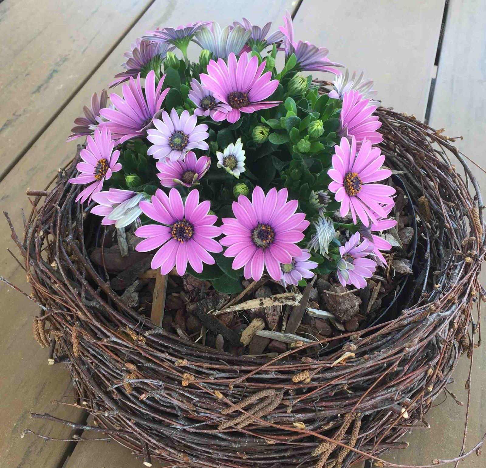 Naše barevná zahrada 🌸 - Zatím kvete krásně 🤗