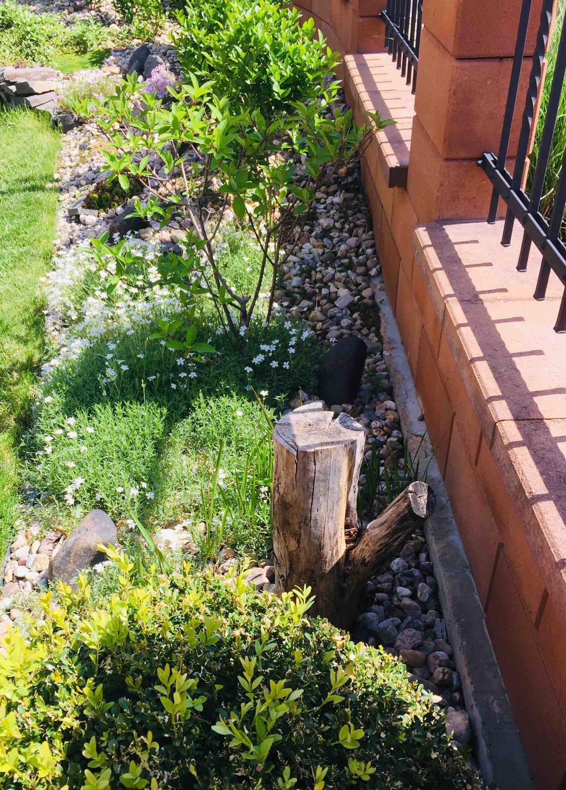 Naše barevná zahrada 🌸 rok 2020 - Po letech se to krásně rozrůstá 🤗