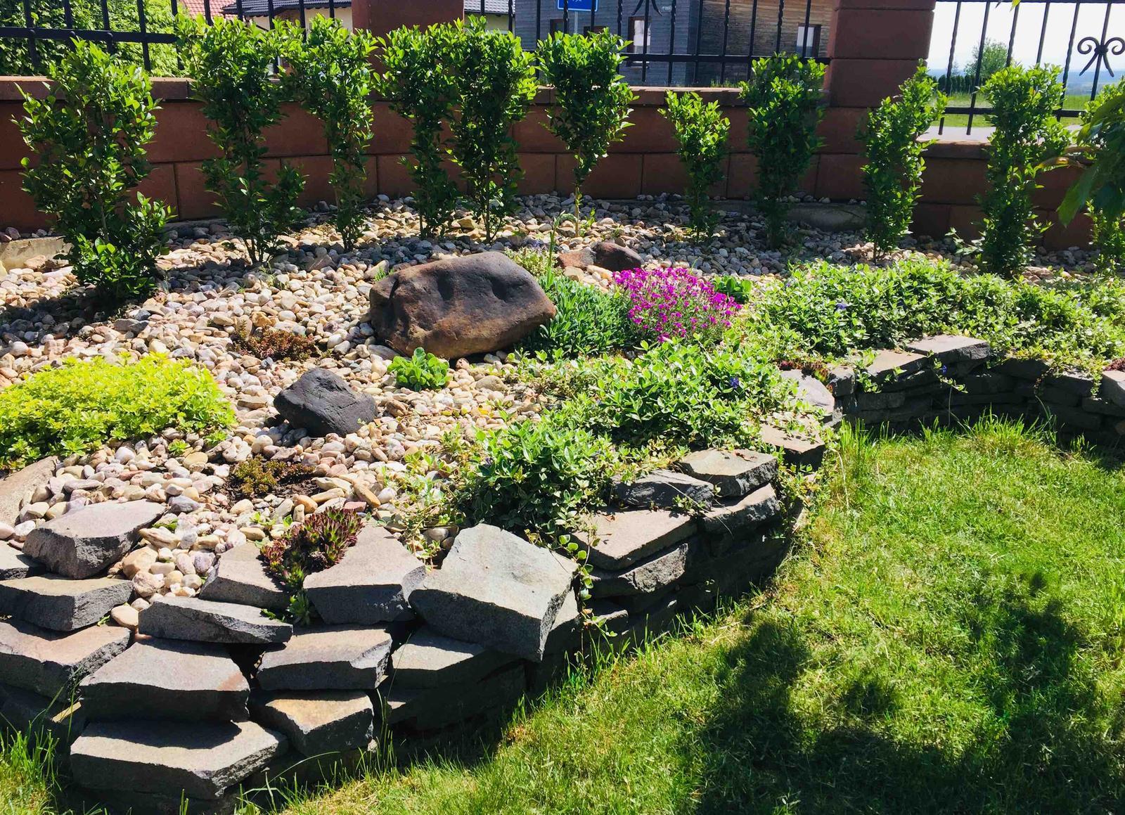 Naše barevná zahrada 🌸 - Barvínek to už krásně pokrývá🌸