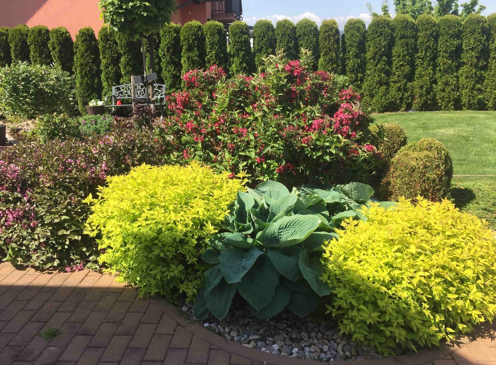 Naše barevná zahrada 🌸 rok 2020 - Tavolníky dělají krásnou parádu a mezi nimi je snad ta největší bohyška 🤗 také vajgélie v květu 🌸