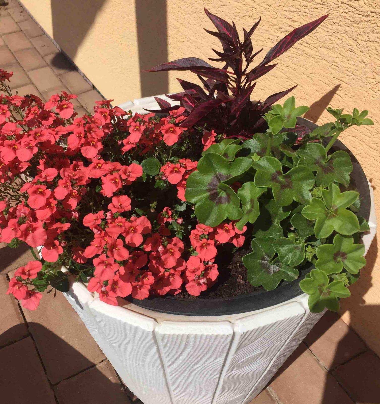 Naše barevná zahrada 🌸 - Tady už vše také povyskočilo