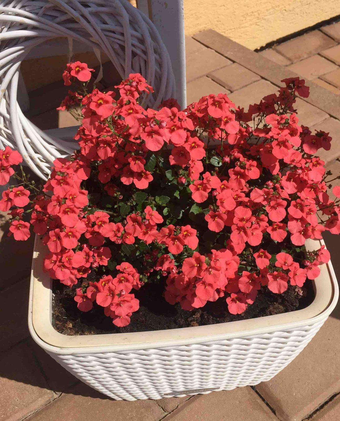 Naše barevná zahrada 🌸 - Z této barvičky jsem nadšená
