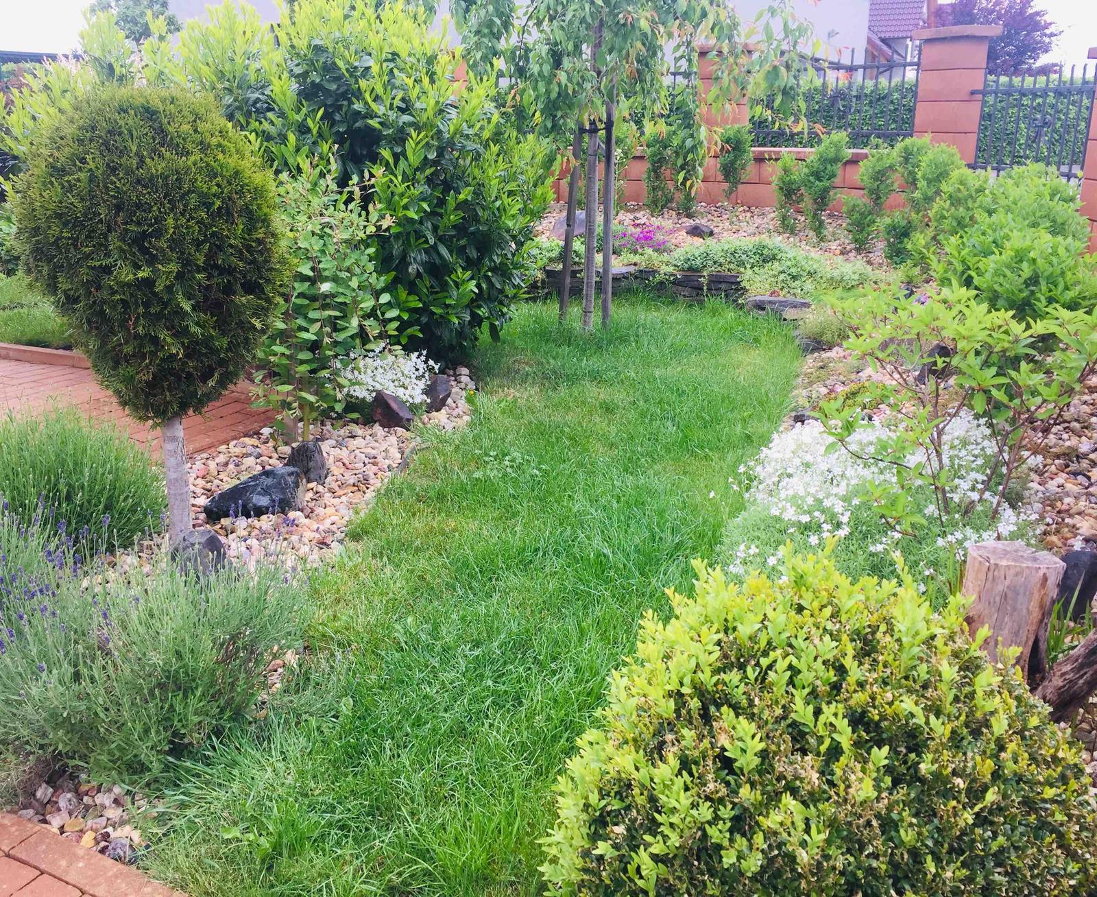 Naše barevná zahrada 🌸 - Za chvilku už začnou kvést i levandule