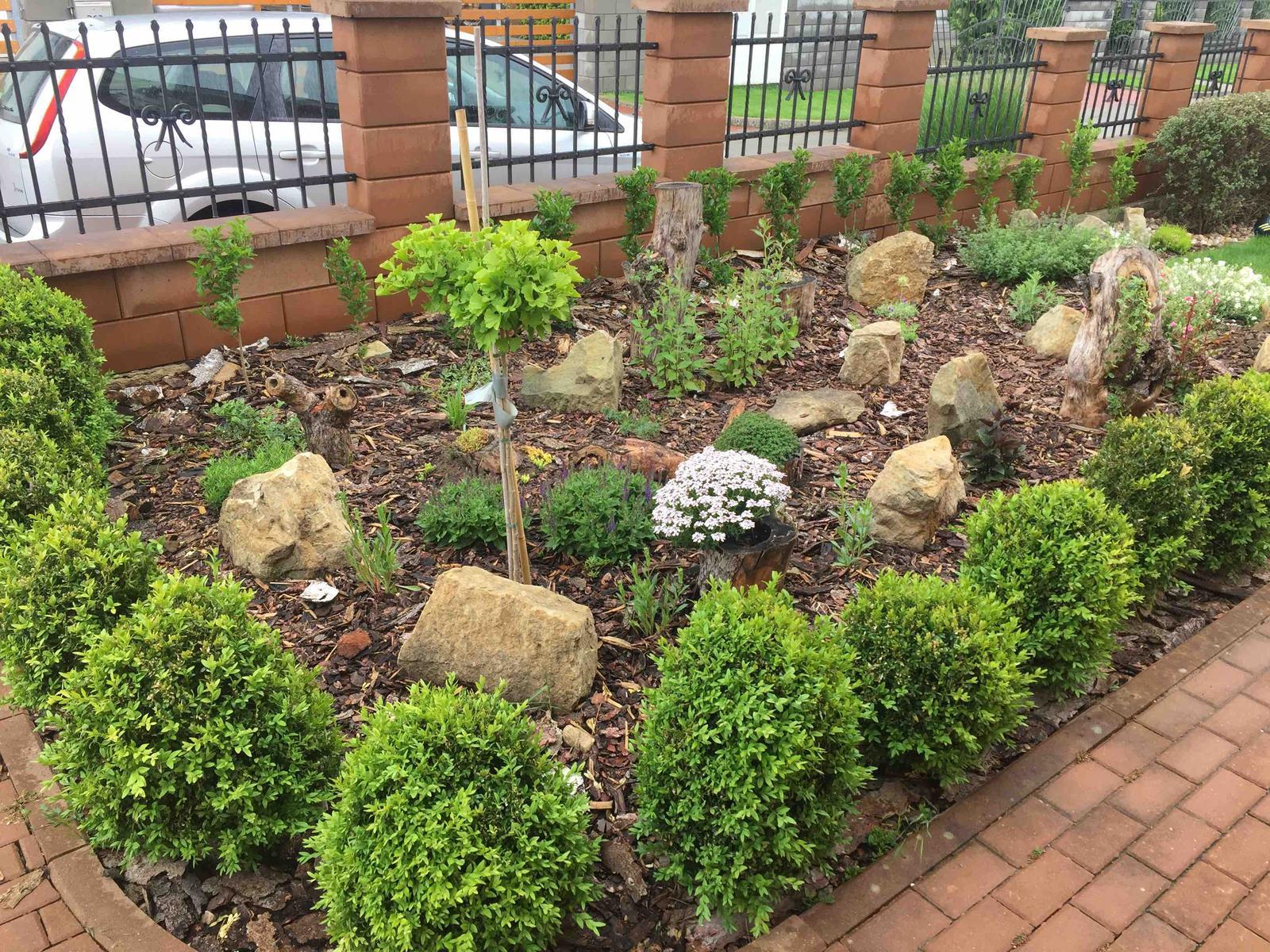 Naše barevná zahrada 🌸 - Nový záhon z loňského roku a buxusy se po najézdech housenek pěkně zase vzpamatovaly 👌