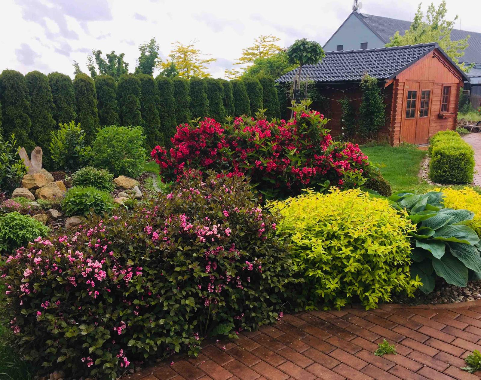 Naše barevná zahrada 🌸 - I když je zataženo, tak v zahradě to hraje barvami 🌸