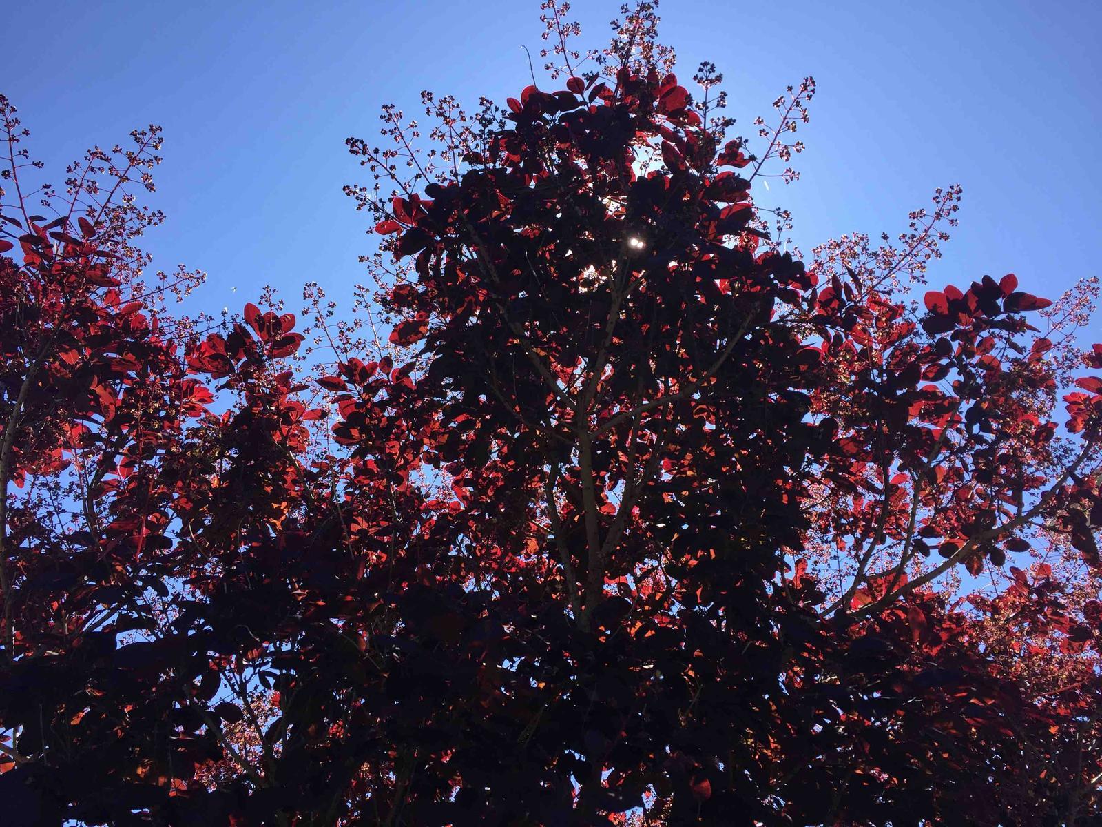 Naše barevná zahrada 🌸 - Růj vlasatá bude každým dnem kvést 🤗
