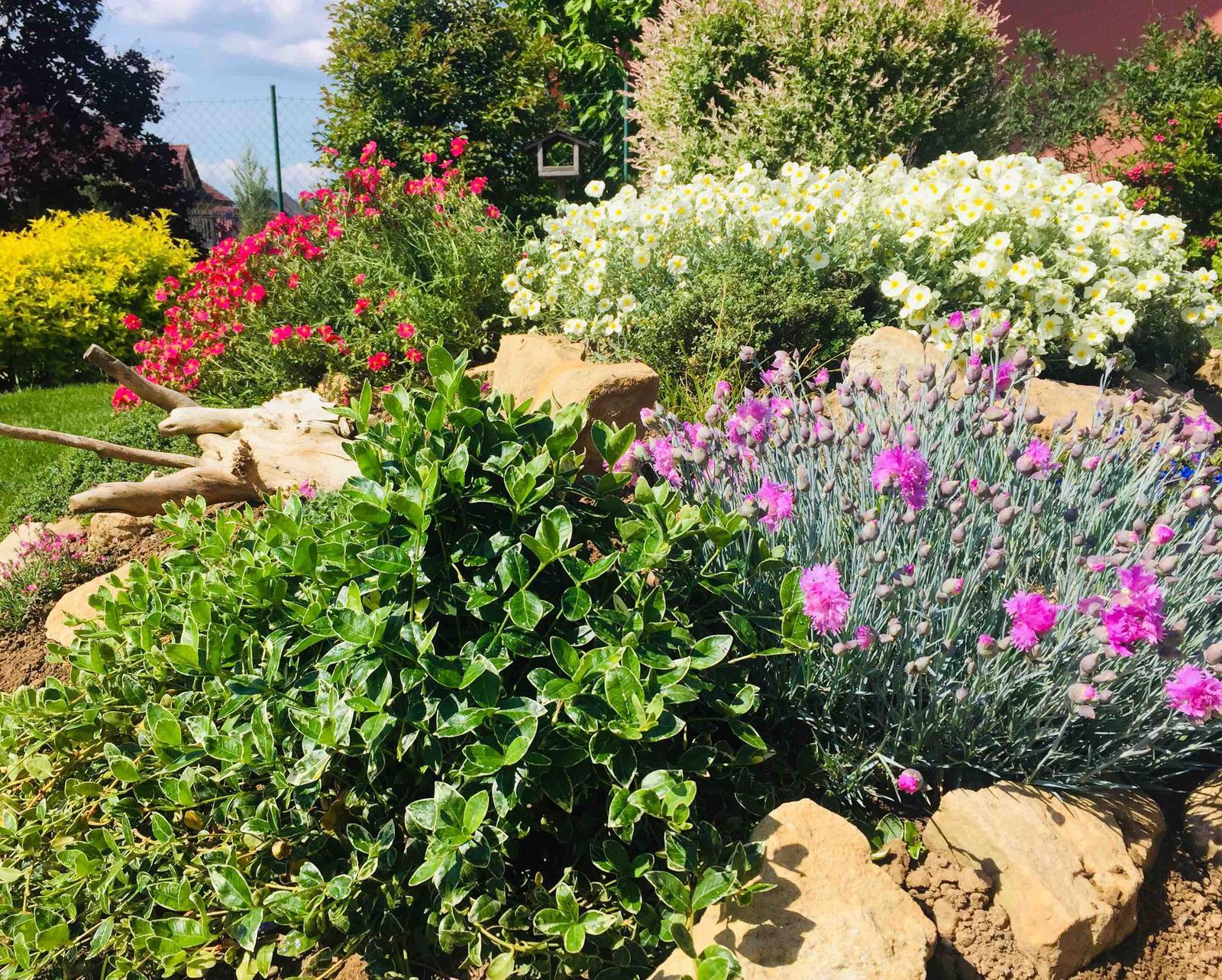 Naše barevná zahrada 🌸 - Na skalce to hraje všemi barvami 🌸