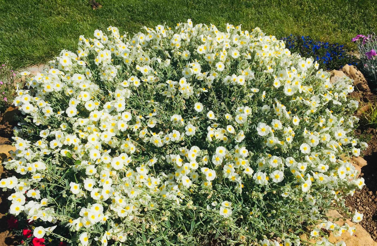 Naše barevná zahrada 🌸 - Devaterník