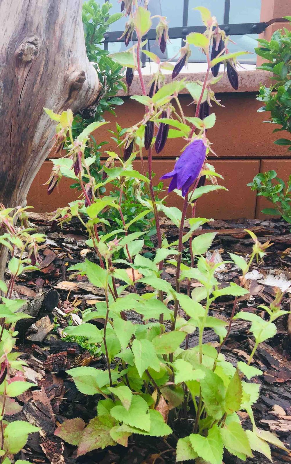 Naše barevná zahrada 🌸 - Květy budou opravdu obrovské 🤗