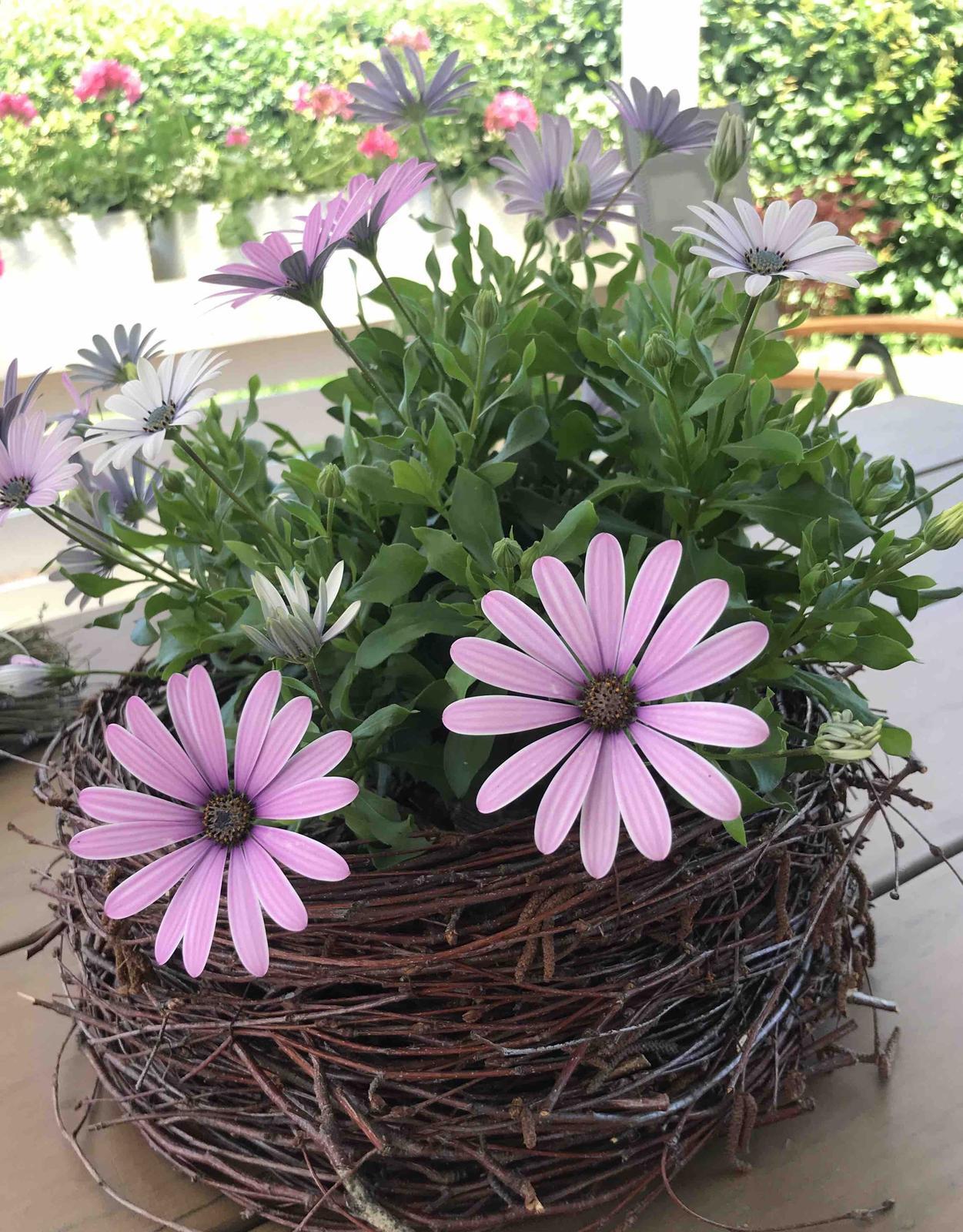 Naše barevná zahrada 🌸 - Daří se mu báječně 🤗