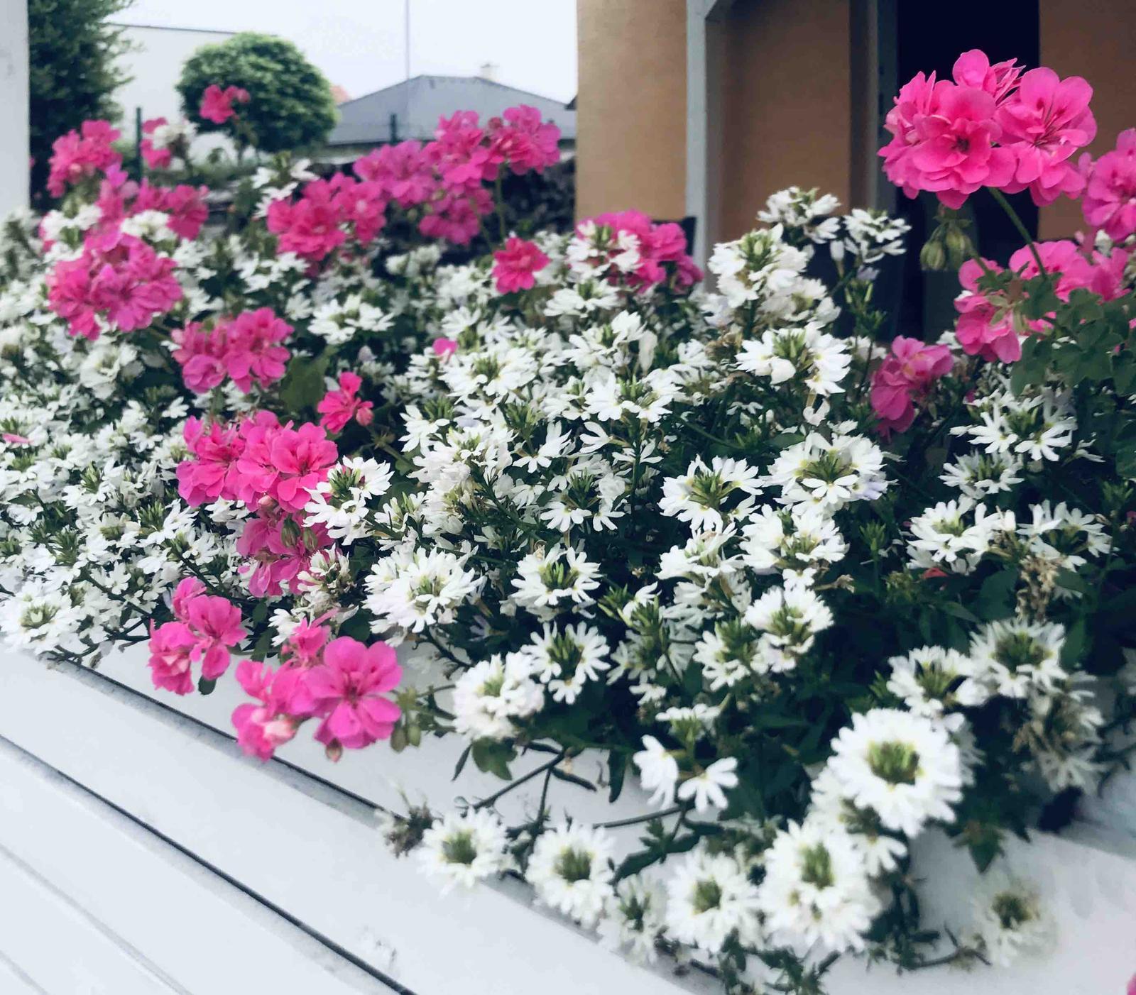 Naše barevná zahrada 🌸 - Severozápadní strana a zde jsou ty letničky nejkrásnější 🌸