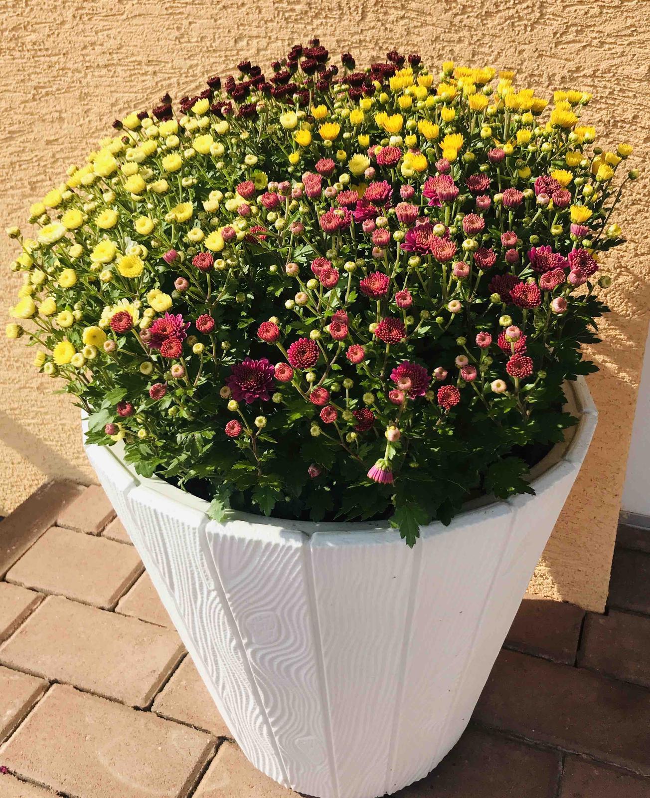 Naše barevná zahrada 🌸 - Nemohla jsem se rozhodnout jakou barvu, tak jsem vzala čtyřbarevnou 🤗