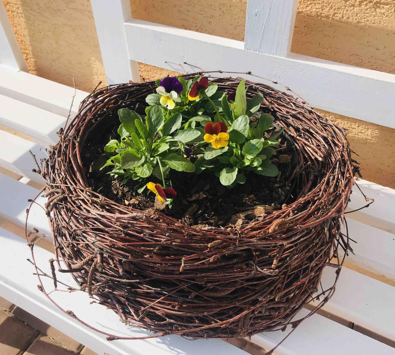 Naše barevná zahrada 🌸 - V hnízdečku na lavičce jsou macešky