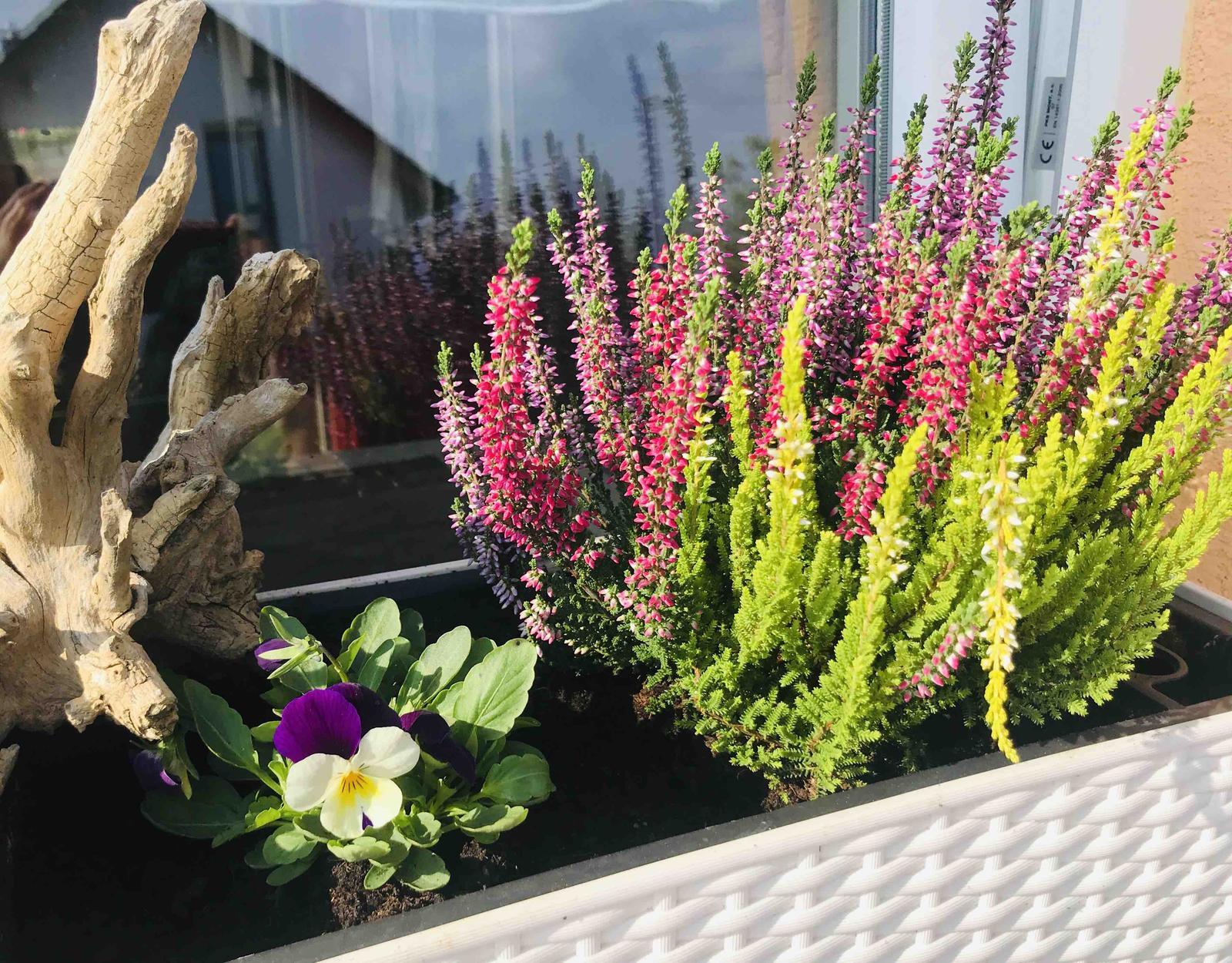 Naše barevná zahrada 🌸 - Obrázek č. 84