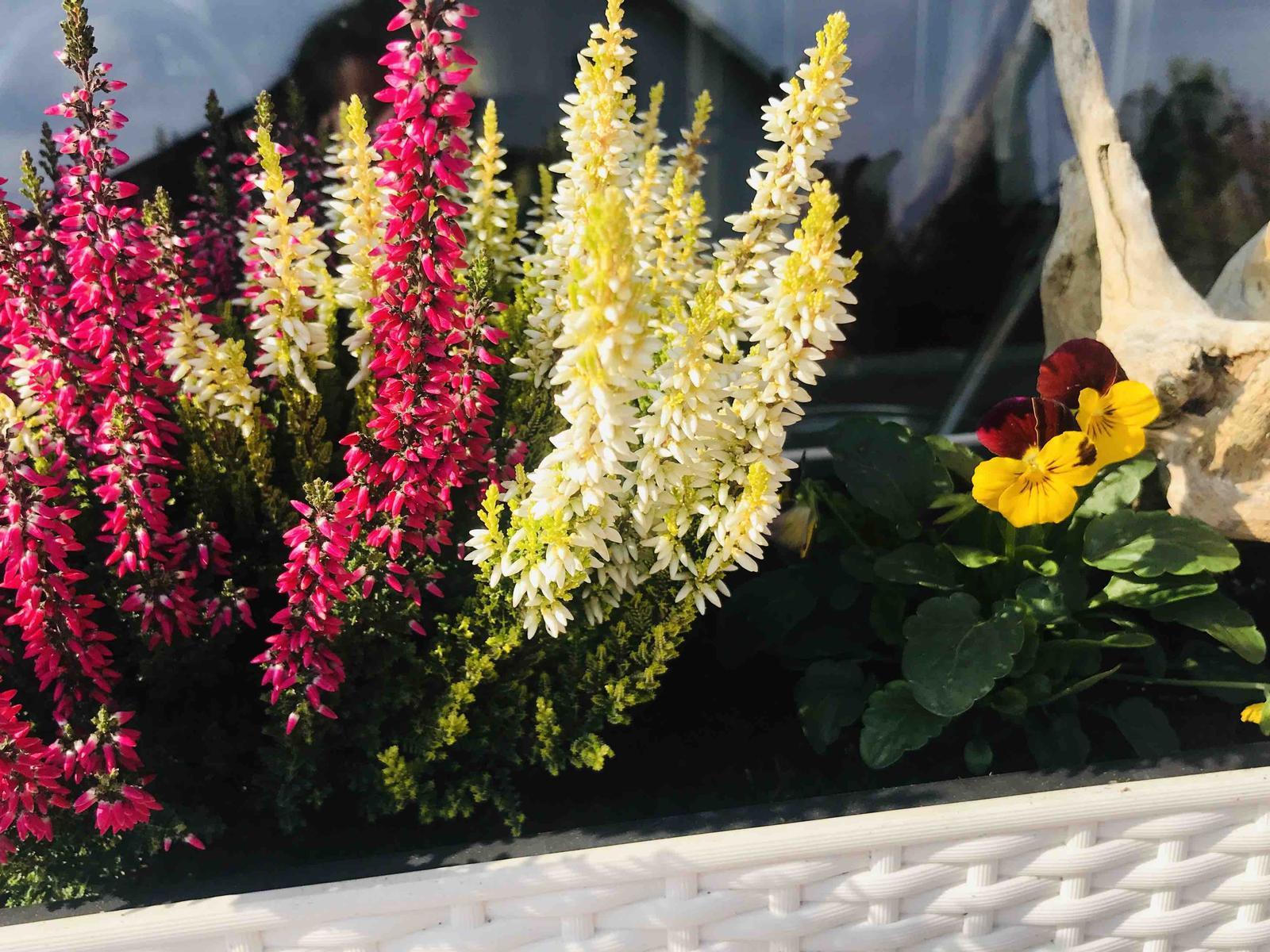 Naše barevná zahrada 🌸 - Obrázek č. 85