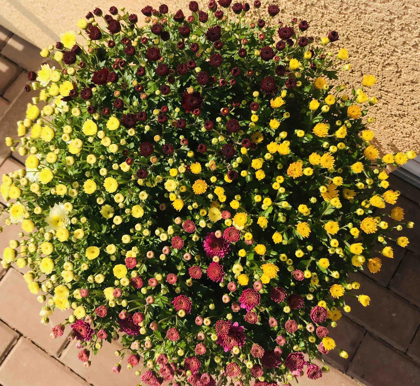 Naše barevná zahrada 🌸 - Obrázek č. 86